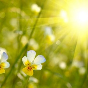 Simple Ayurvedic Tips for Spring