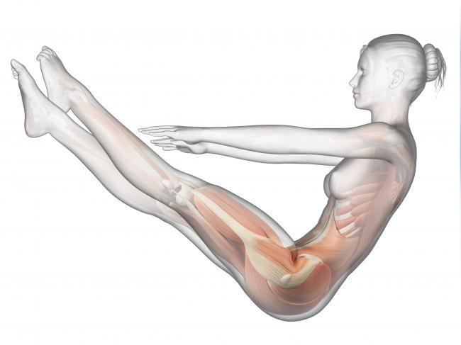Anatomy and Alignment