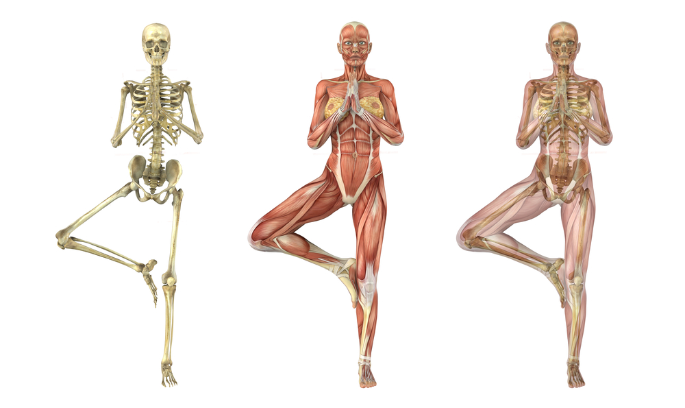 Anatomy and Alignment | YogaFit Canada Yoga Teacher Training