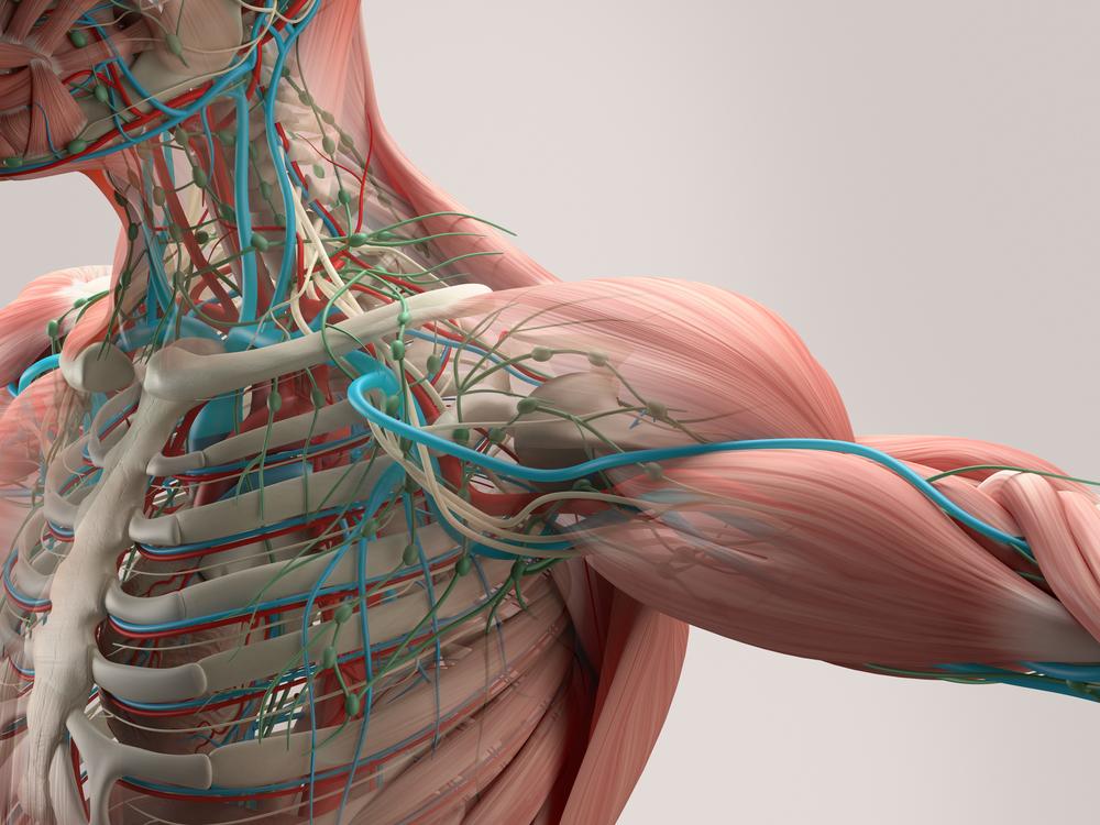 Anatomy and Alignment II